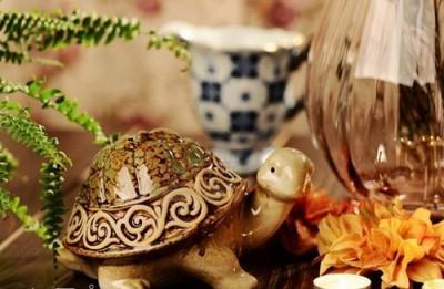 Tại sao nuôi rùa trong văn phòng giám đốc lại mang đến may mắn