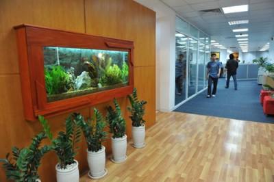 Một số vấn đề khi trang trí văn phòng bằng bể cá cảnh