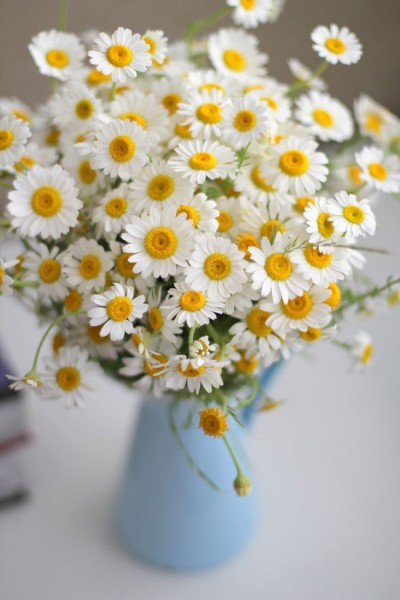 Những ý tưởng cắm hoa trang trí văn phòng đẹp phát hờn