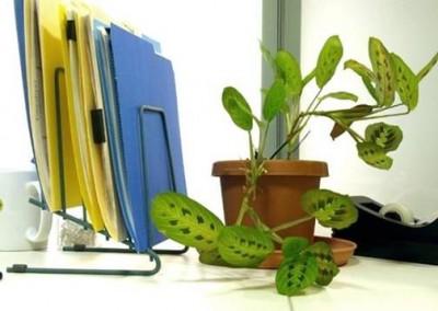 Lựa chọn cây xanh cho bàn làm việc văn phòng
